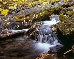 Dunnfield_Creek_Autumn.jpg