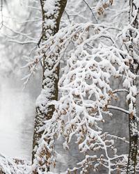 passaic-river-snow-4079.jpg