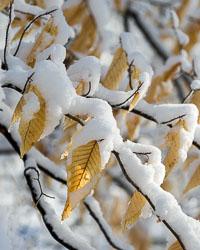 passaic-river-snow-4132-Edit-Edit.jpg